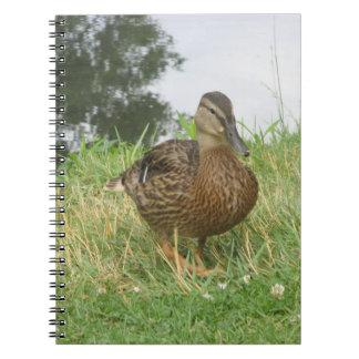 Cuaderno femenino del pato del pato silvestre