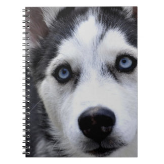 Cuaderno fornido observado azul