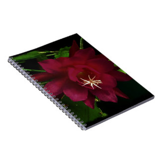 Cuaderno fucsia de la flor del cactus