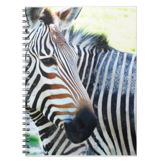 Cuaderno intrépido de la cebra