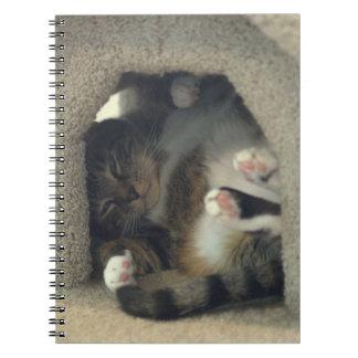 ¡Cuaderno - la siesta como usted es un gato!