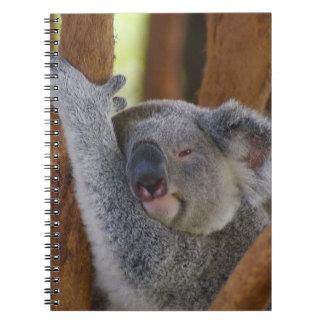 Cuaderno mimoso del oso de koala