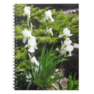 Cuaderno o diario del iris