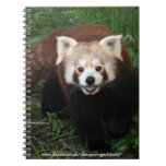cuaderno - panda roja