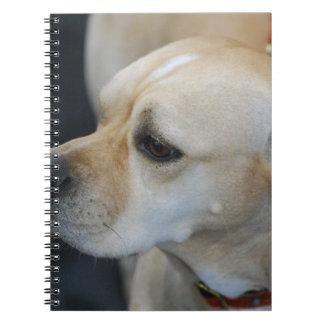 Cuaderno portugués del indicador