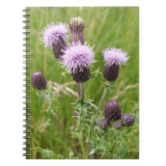 Cuaderno púrpura del cardo