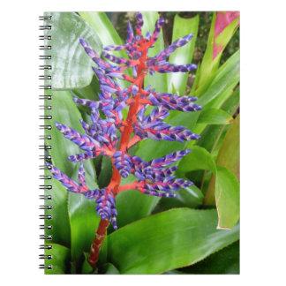 Cuaderno rojo púrpura de la floración de Bromeliad