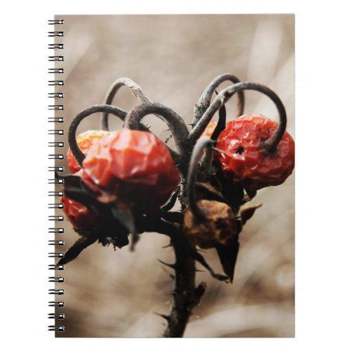 cuaderno rojo secado de las bayas