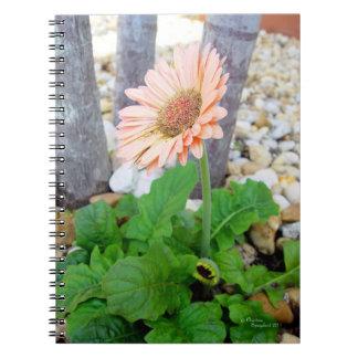 Cuaderno rosado de la margarita del gerbera