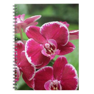 Cuaderno rosado de las orquídeas