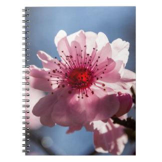 Cuaderno Sunlit de la flor de cerezo