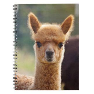 Cuadernos espirales de la alpaca del bebé