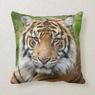 Cuadrado de la foto del tigre del gato grande cojín