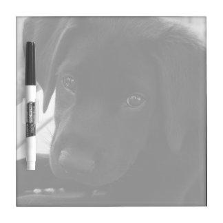 Cuadrado del perrito del labrador retriever pizarras