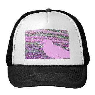 Cuadrado rosado de la gaviota gorras