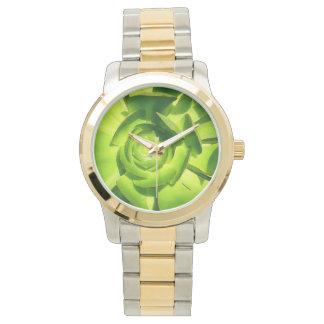 Cuadrado suculento del Aeonium verde del Amy Reloj