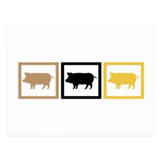Cuadrados del cerdo postales