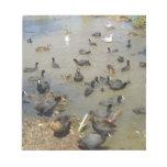 Cuadrilla de aves del agua libreta para notas