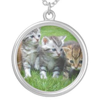 Cuadrilla de gatitos adorables joyerias personalizadas