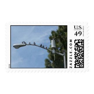 Cuadrilla de ocho palomas que se sientan en el envio