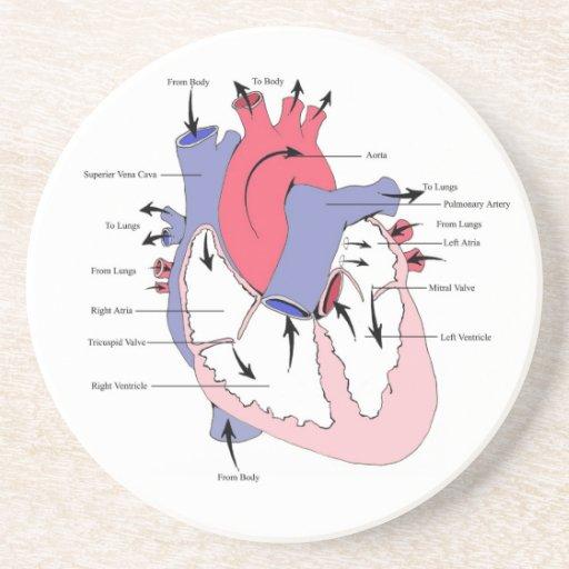 Cuadro 2. corazón normal Function.jpg Posavaso Para Bebida