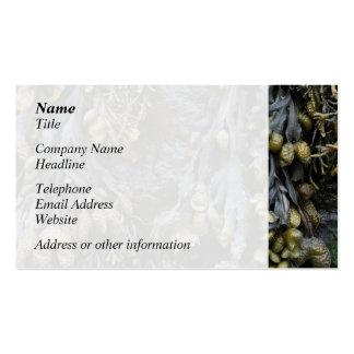 Cuadro de la alga marina tarjetas de visita