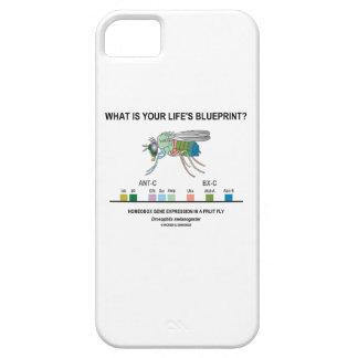 ¿Cuál es el modelo de su vida? (Expresión génica) iPhone 5 Carcasas