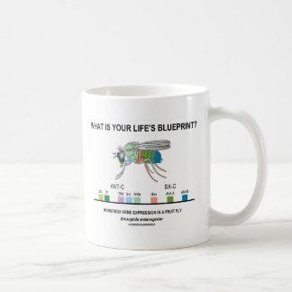 ¿Cuál es el modelo de su vida? (Expresión génica) Tazas De Café