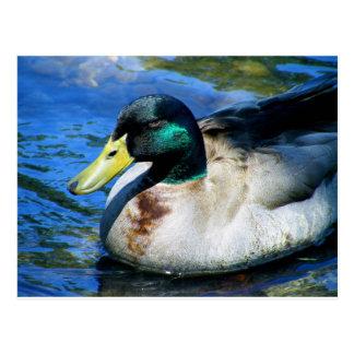 ¿Cuál es Quackin? Postales
