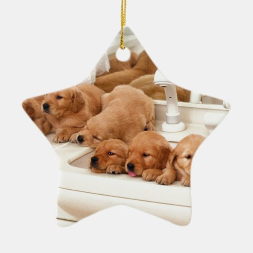 ¿Cuál es un baño? Los perritos lindos descubren Adorno Navideño De Cerámica En Forma De Estrella