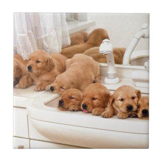 ¿Cuál es un baño? Los perritos lindos descubren Ba Azulejos