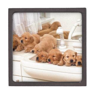 ¿Cuál es un baño? Los perritos lindos descubren Ba Caja De Recuerdo De Calidad
