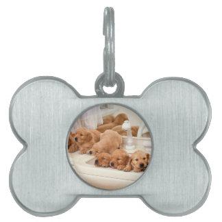 ¿Cuál es un baño Los perritos lindos descubren Ba Placa De Nombre De Mascota