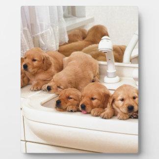 ¿Cuál es un baño? Los perritos lindos descubren Ba Placas De Madera