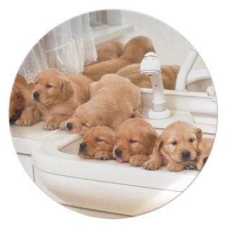 ¿Cuál es un baño? Los perritos lindos descubren Ba Platos