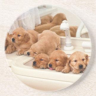 ¿Cuál es un baño? Los perritos lindos descubren Ba Posavasos Cerveza