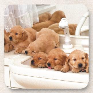 ¿Cuál es un baño? Los perritos lindos descubren Ba Posavasos De Bebidas