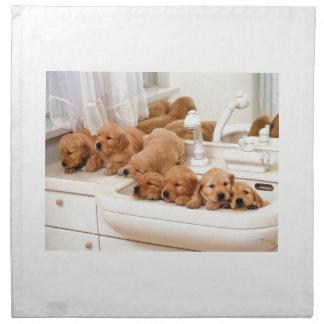 ¿Cuál es un baño? Los perritos lindos descubren Ba Servilletas De Papel
