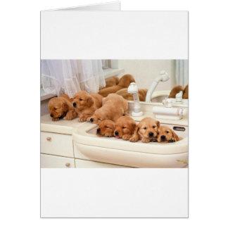 ¿Cuál es un baño? Los perritos lindos descubren Ba Tarjeta De Felicitación