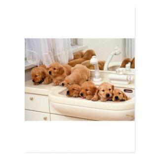 ¿Cuál es un baño? Los perritos lindos descubren Ba Tarjeta Postal