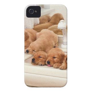 ¿Cuál es un baño? Los perritos lindos descubren iPhone 4 Cobertura