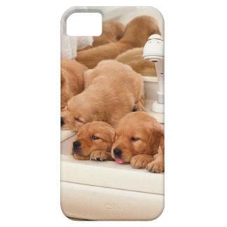 ¿Cuál es un baño? Los perritos lindos descubren iPhone 5 Funda
