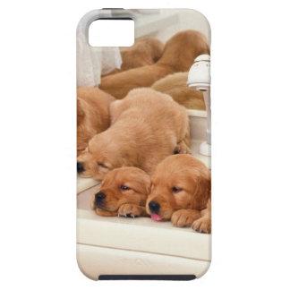 ¿Cuál es un baño? Los perritos lindos descubren iPhone 5 Fundas