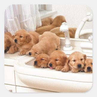 ¿Cuál es un baño? Los perritos lindos descubren Pegatina Cuadrada