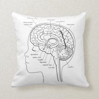 Cuál está en su almohada del cerebro