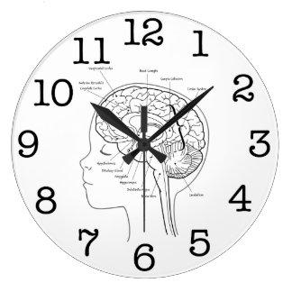 Cuál está en su cerebro reloj