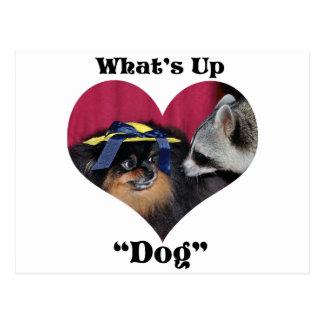 Cuál está encima de perro tarjetas postales