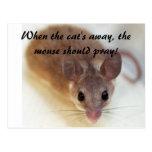 Cuando el gato ausente… tarjetas postales