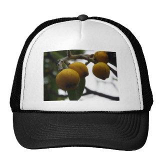 Cuando la vida le da los limones… gorros
