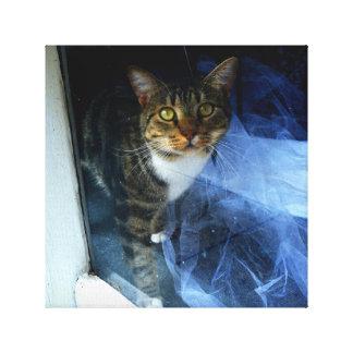 ¿Cuánto es ese gatito en la ventana? Impresión En Lienzo Estirada
